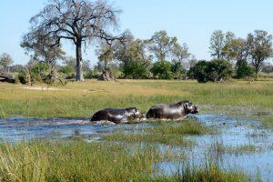 Quelques conseils pratiques pour réussir un séjour touristique au Botswana